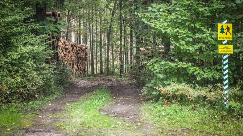 Minister Środowiska broni swoich decyzji, a ekolodzy nadal protestują w Puszczy Białowiejskiej