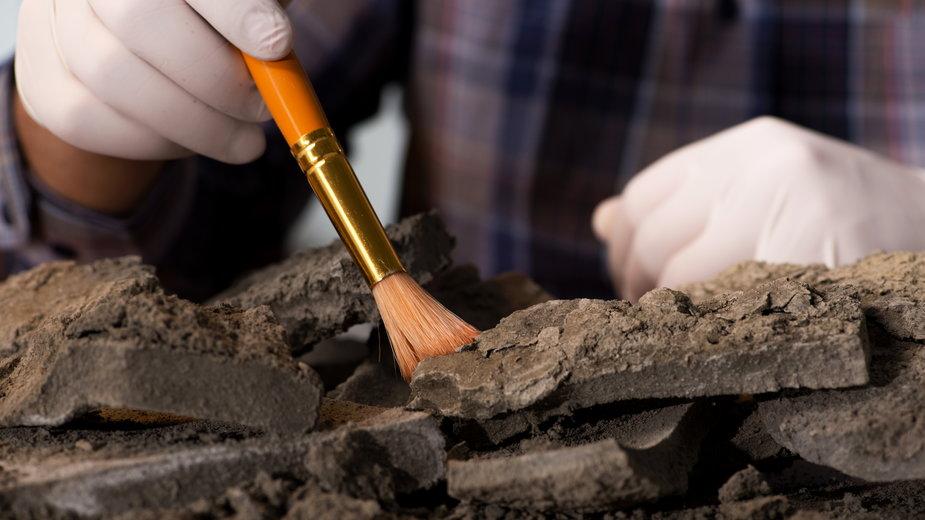 Niecodzienne odkrycie archeologiczne leśników z nadleśnictwa Elbląg