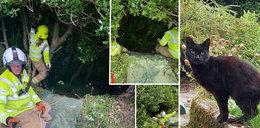 Kot uratował 83-letnią właścicielkę ze straszliwych tarapatów. Pokaleczona leżała w strumieniu na dnie głębokiego wąwozu
