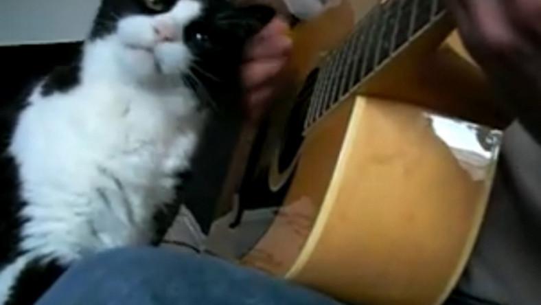 Kot, któremu muzyka nie przeszkadza