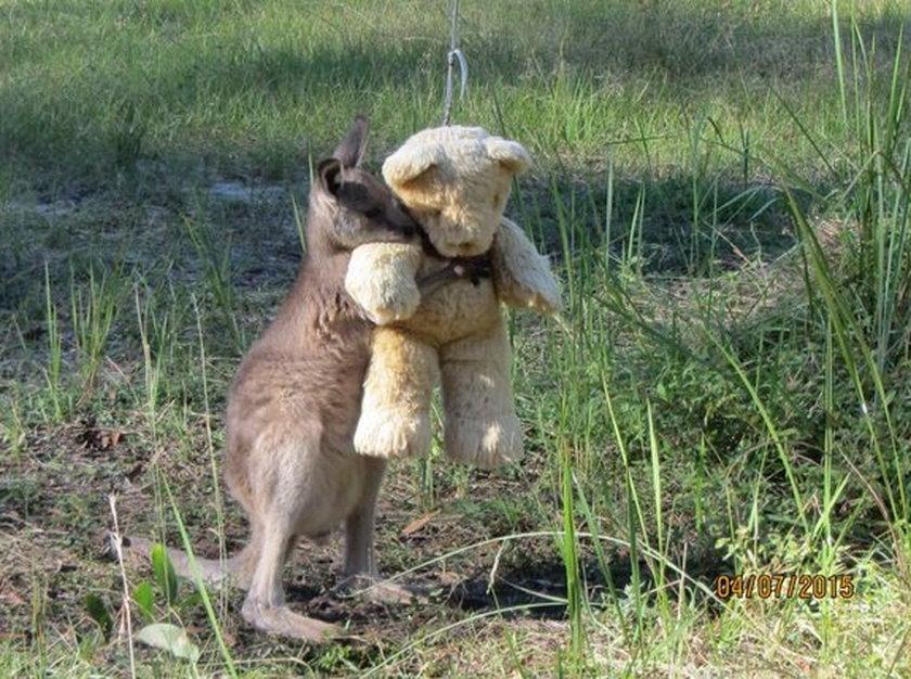 Osierocony kangurek przytula pluszowego misia