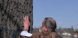 Desperacki czyn aktywisty z Gniezna. Przybił rękę do drzewa, by je chronić [18+]