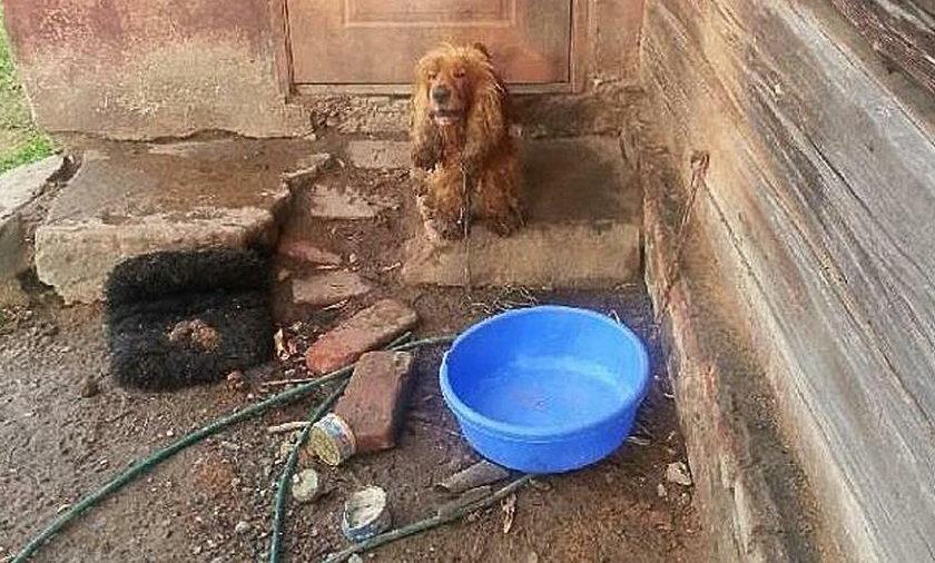 Psy przez dwa tygodnie nie miały co pić i jeść