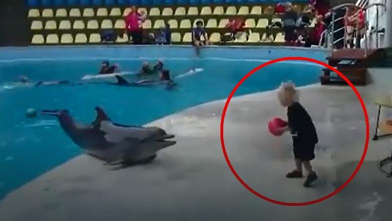 Chłopiec bawi się z delfinem w aportowanie