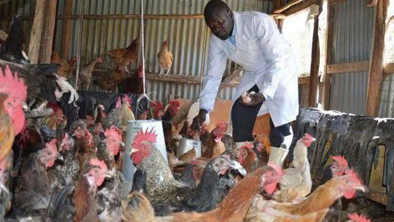 Poultry farming in Kisumu
