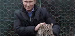 Radny PiS: ZOO wspiera propagandę Putina
