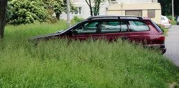 Kary za nieskoszone trawy w Nowej Hucie