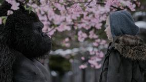 """""""Wojna o planetę małp"""": nowy fragment filmu"""