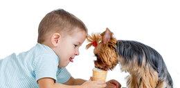 Jak dbać o psa w upały? Prosty sposób!
