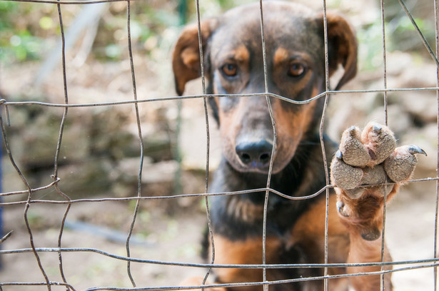 """Fakt, że zdaniem oskarżonego nie doszło do znęcania """"nie może być żadnym wyznacznikiem standardów, w jakich zwierzę należy chować""""."""