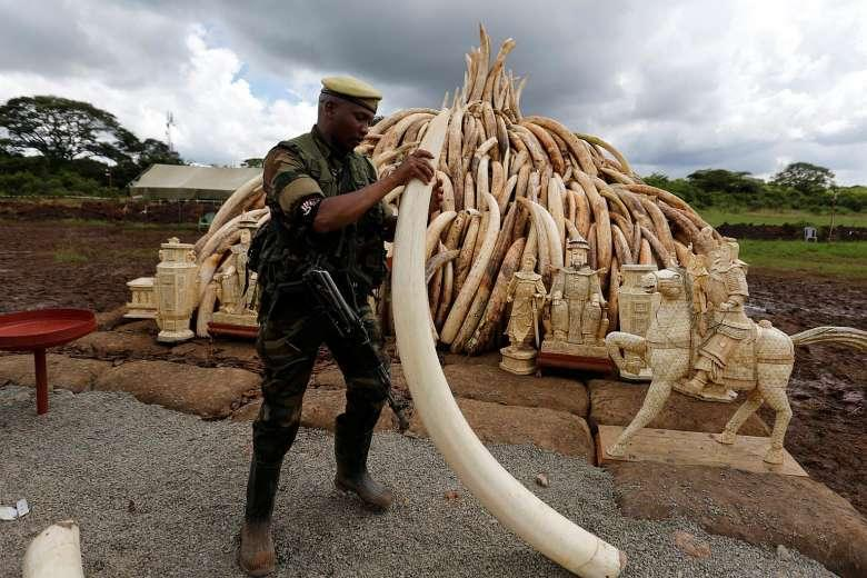 Ms Fenglan, who has lived in since the 1970s, had been charged with leading one of Africa's biggest ivory smuggling rings, responsible for the slaughter of hundreds of elephants.