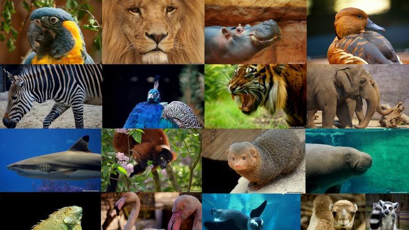 Zwierzęta wrocławskiego ZOO