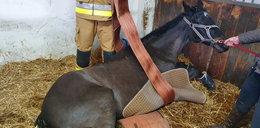 Dwie godziny ratowali konia. Nietypowa akcja strażaków