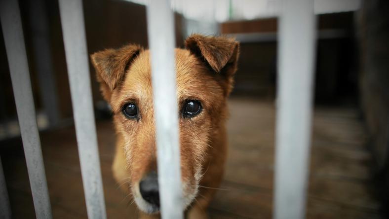 Apel ws. azylu dla bezpańskich zwierząt