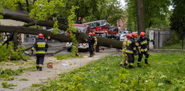 Księży Młyn w Łodzi. Drzewo runęło na ulicę