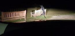 Pantera w parku wystraszyła mieszkańców. Policjanci zdębieli, gdy podeszli bliżej