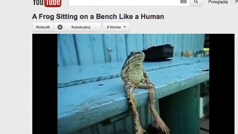 Żaba jak człowiek
