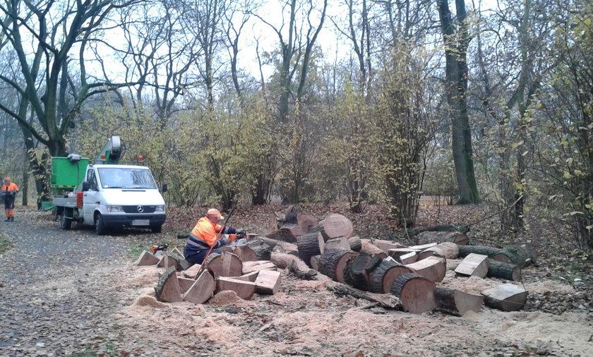 wycięli drzewa w parku poniatowskiego