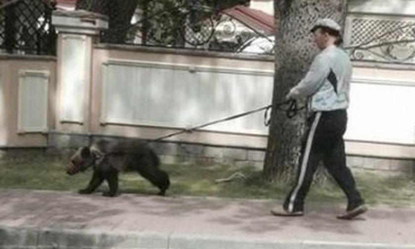 Niedźwiedzie na smyczy, a ludzie chodzą w pletwach!