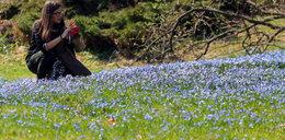 Wiosna! Park Klepacza w Łodzi zasypany kwiatami