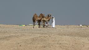 MŚ 2022 - Katar zbuduje dla kibiców miasteczko namiotowe na pustyni