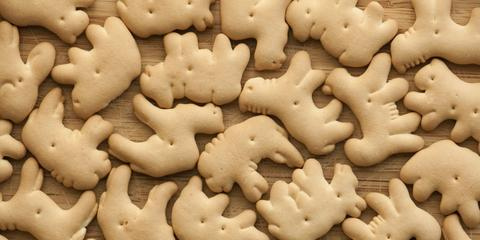 Dr Pimple Popper Removes 6 Animal Cracker Lipomas From A
