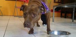 Odnalazła ukochanego psa po 5 latach rozłąki