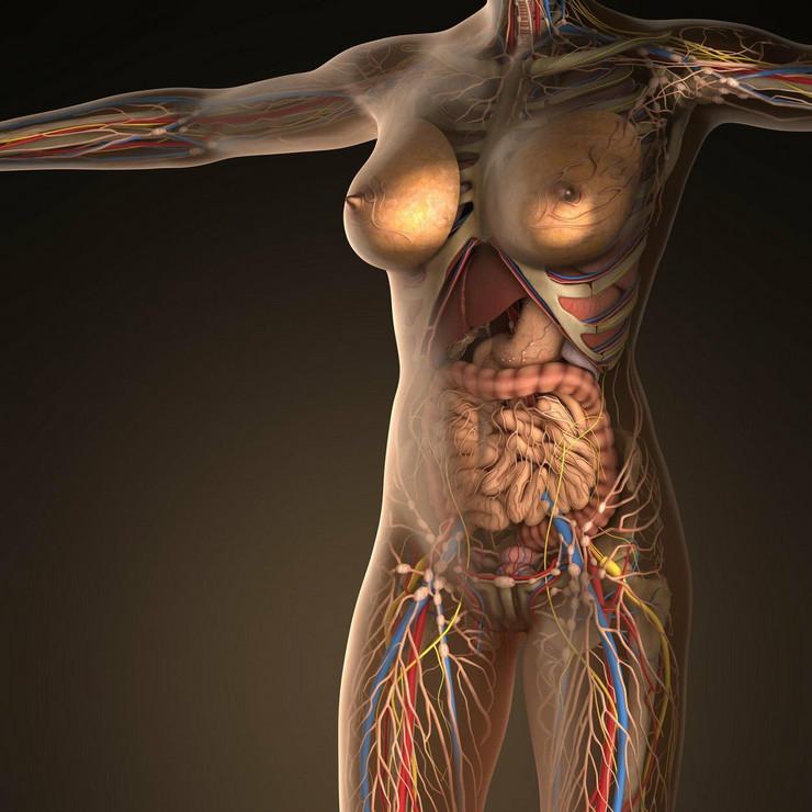 ljudsko telo