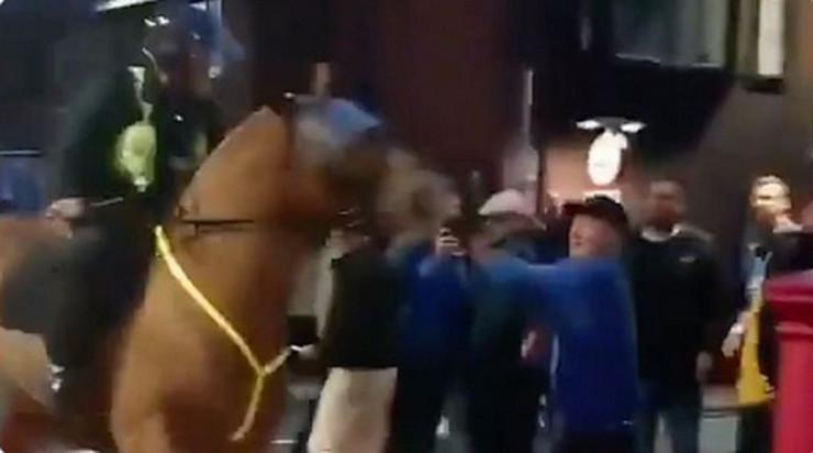 Policijski konj