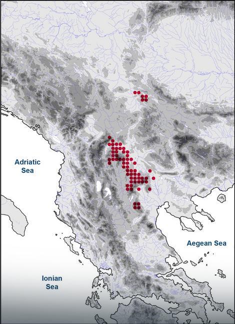 Karta pokazuje gde je sve rasprostranjena Ramonda nathaliae