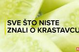 Sorti_cudotvorni_krastavac_vesti_blic_safe