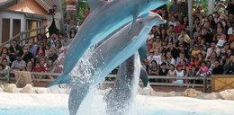 Ludzkie prawa dla delfinów?!