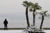 sneg palme