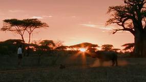 Kim Wolhuter oko w oko z nosorożcem czarnym podczas kręcenia programu dla Discovery Channel