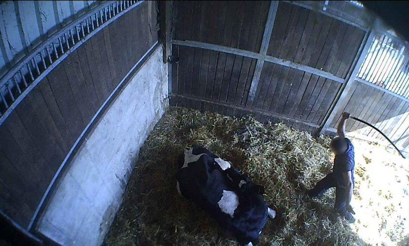 Film, na którym widać torturowane zwierzęta ujrzał światło dzienne.