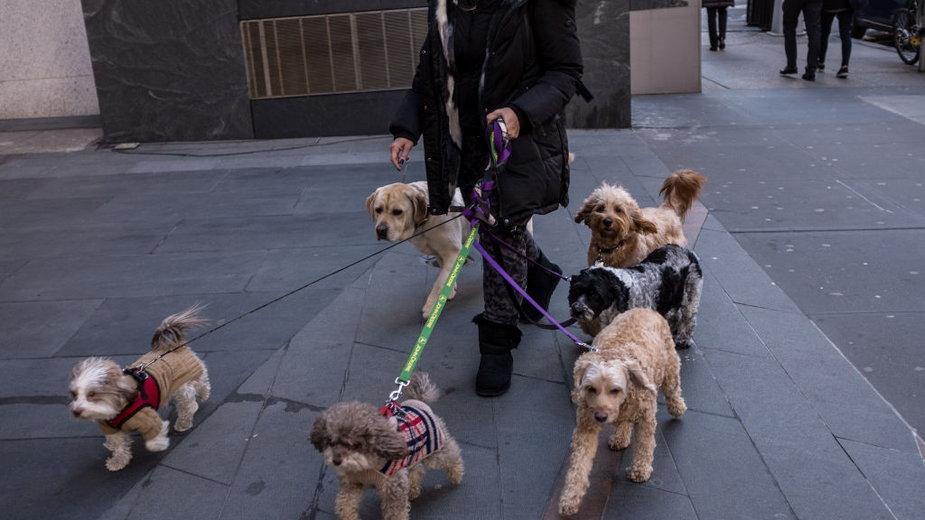 Czy za psa bez smyczy będzie można dostać mandat?