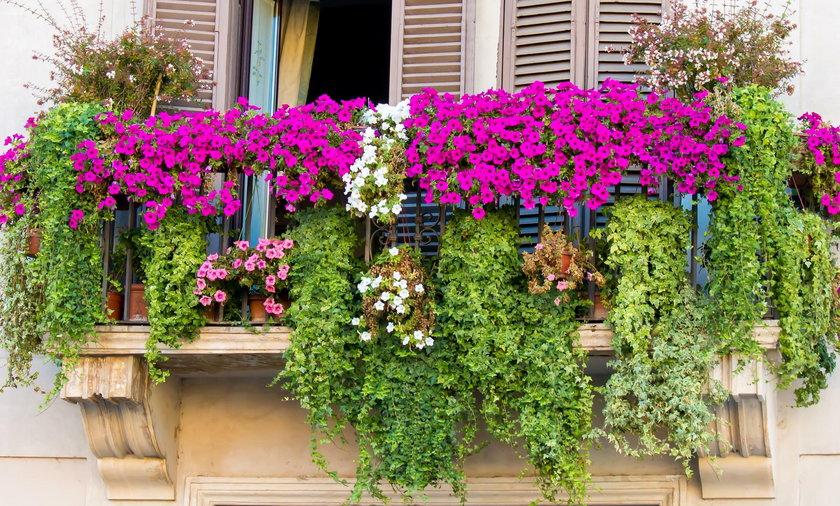 Jakie Rosliny Wybrac Na Balkon Kwiaty Ktore Idealnie Go Udekoruja