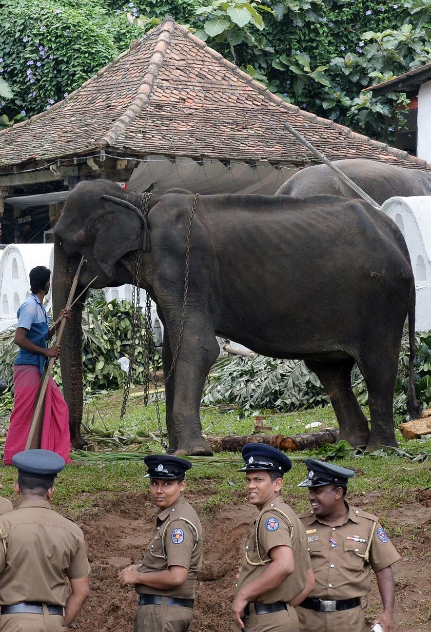 Szokujące zdjęcia słonia