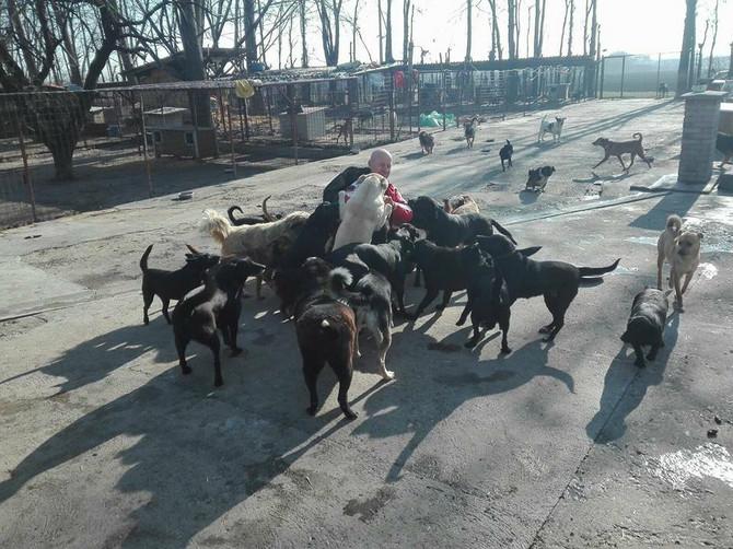 Trenutno o 250 pasa u azilu brigu vodi samo četvoro ljudi