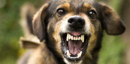Kobietę na wycieczce ugryzł pies. Zmarła na wściekliznę