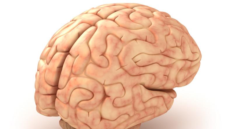 Religijność zależy od budowy mózgu?