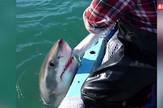 AP_Ajkula_napada_ribarski_brod_vesti_blic_safe