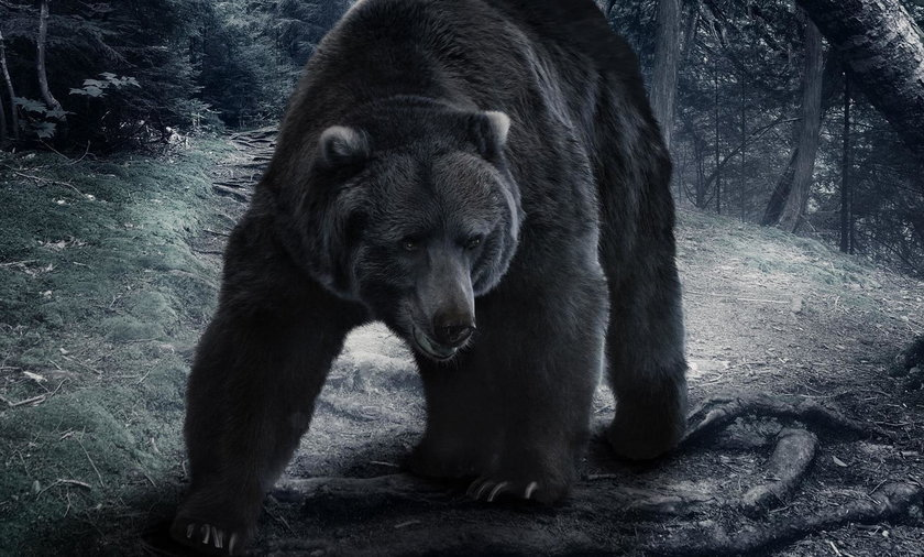Indie. Chciał zrobić selfie z niedźwiedziem