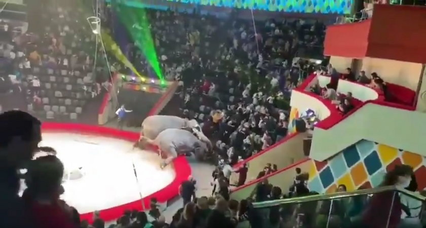 Dramatyczne sceny w cyrku! Słonie pobiły się na oczach widowni