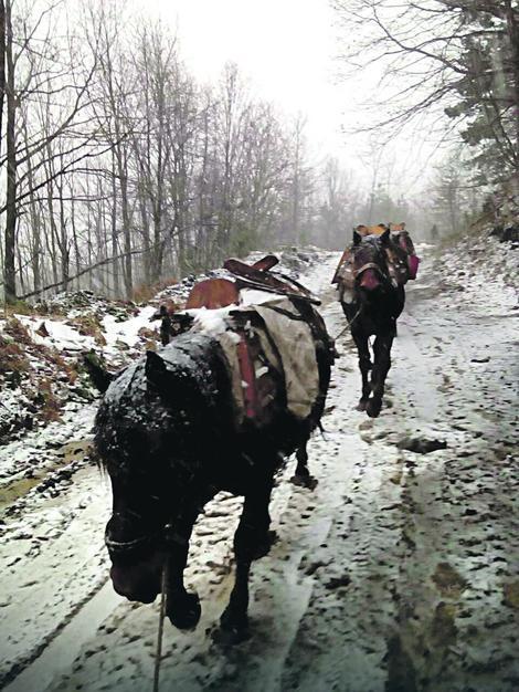 Grbovići za izvlačenje drveta koriste 16 konja