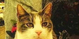 Kot od roku chodzi na grób pana i przynosi mu...