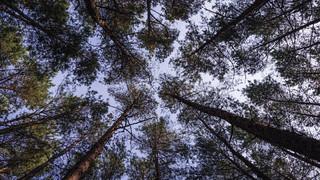 Leśna przyroda ma być skuteczniej chroniona