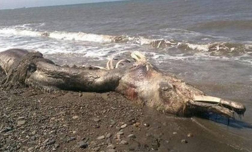 Morze wyrzuciło na brzeg dziwnego morskiego stwora
