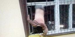 Pechowy włamywacz spod Sieradza. Chciał okraść sklep, a poległ na... kracie