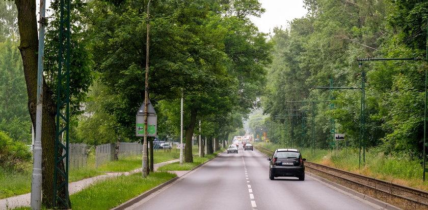 Szykują rzeź drzew pod ścieżki rowerowe